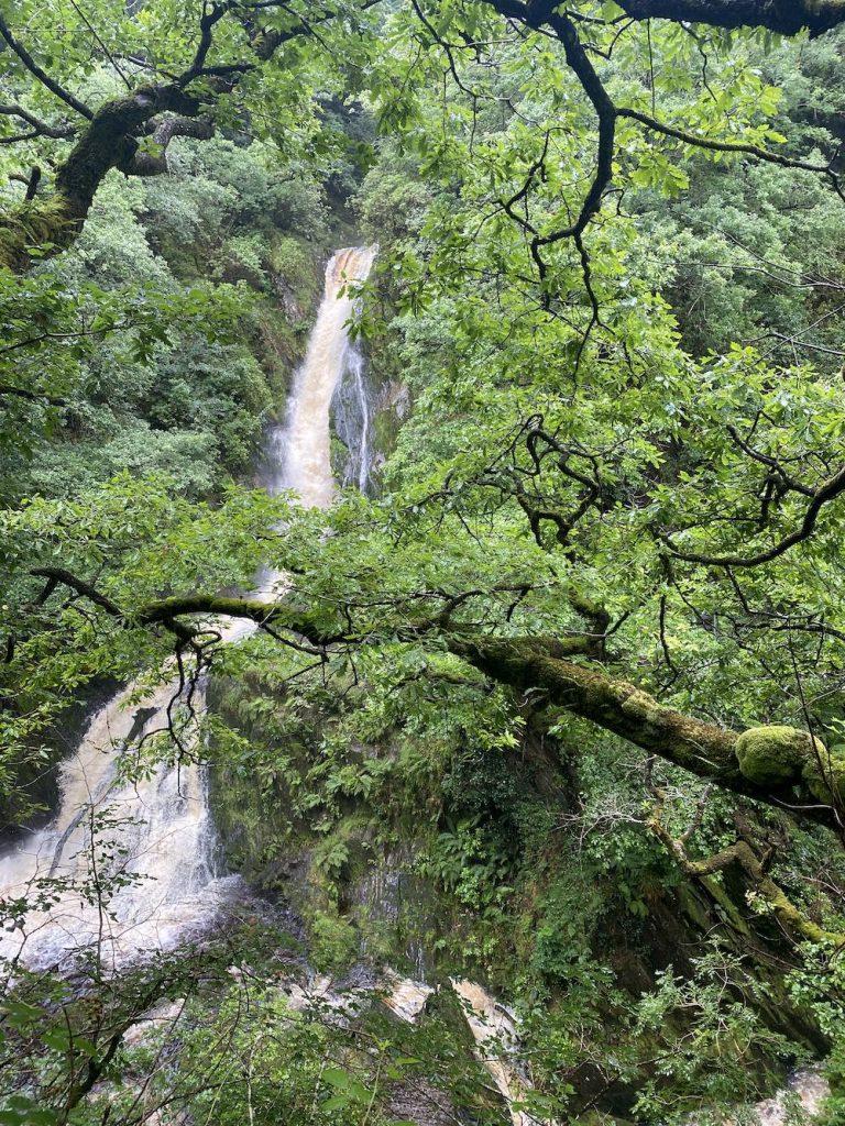 Waterfall in between trees