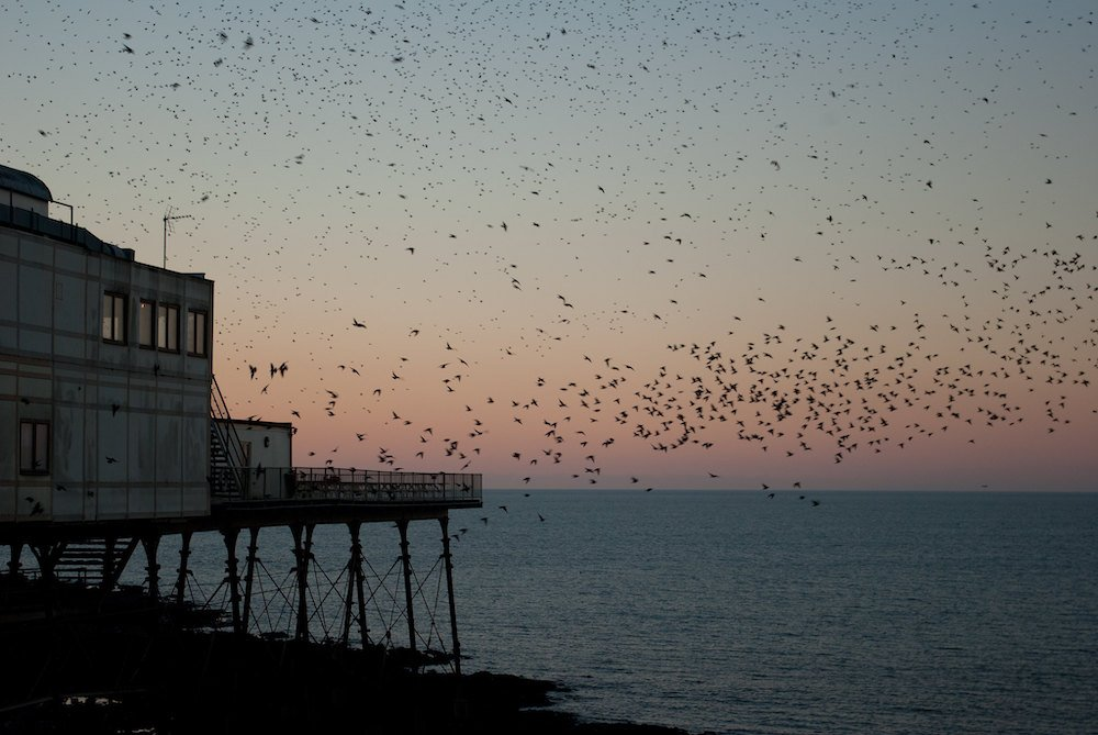 Birds flying above a pier during sunset